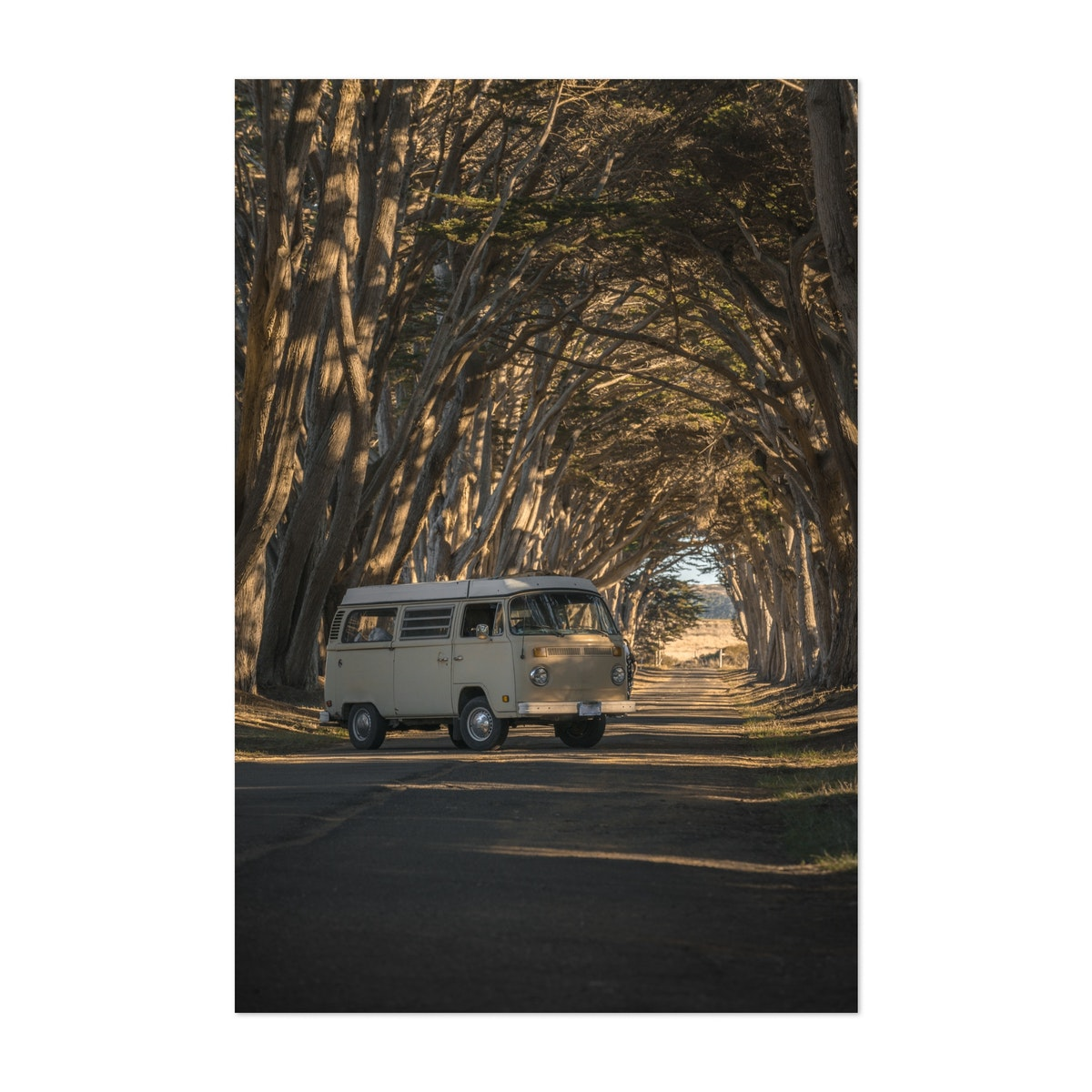 Vintage Bus in Tree Tunnel