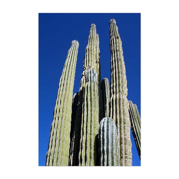 Arizona Cactus 1 by ILIA
