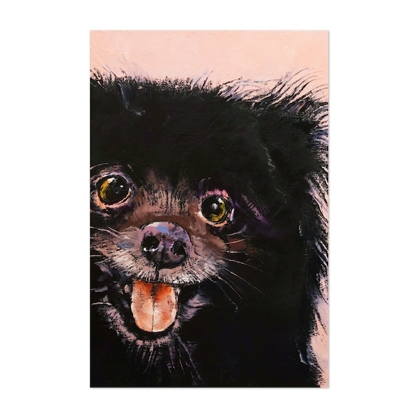 Black Pomeranian by Michael Creese