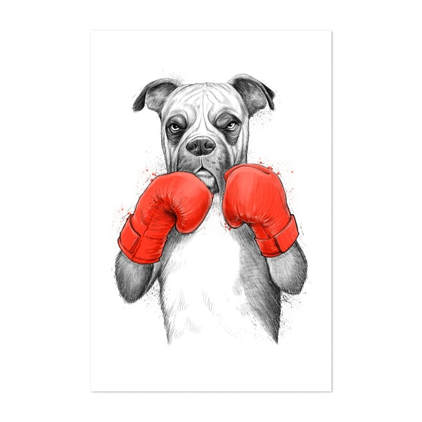 Boxer by NikKor
