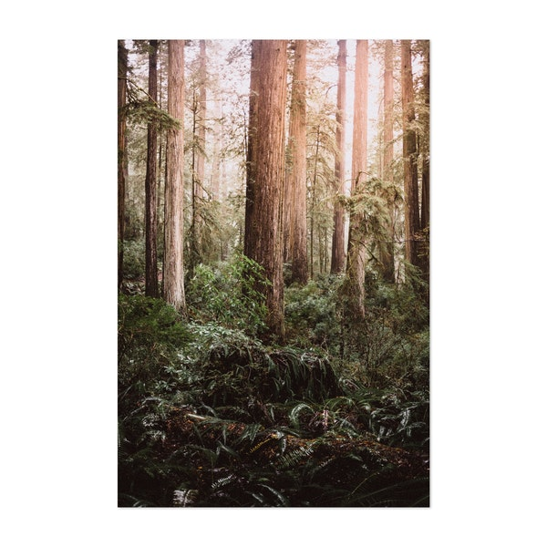 Forest Glow of Redwood by Archie Frink