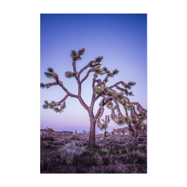Joshua Tree under Earth Shadow by Archie Frink