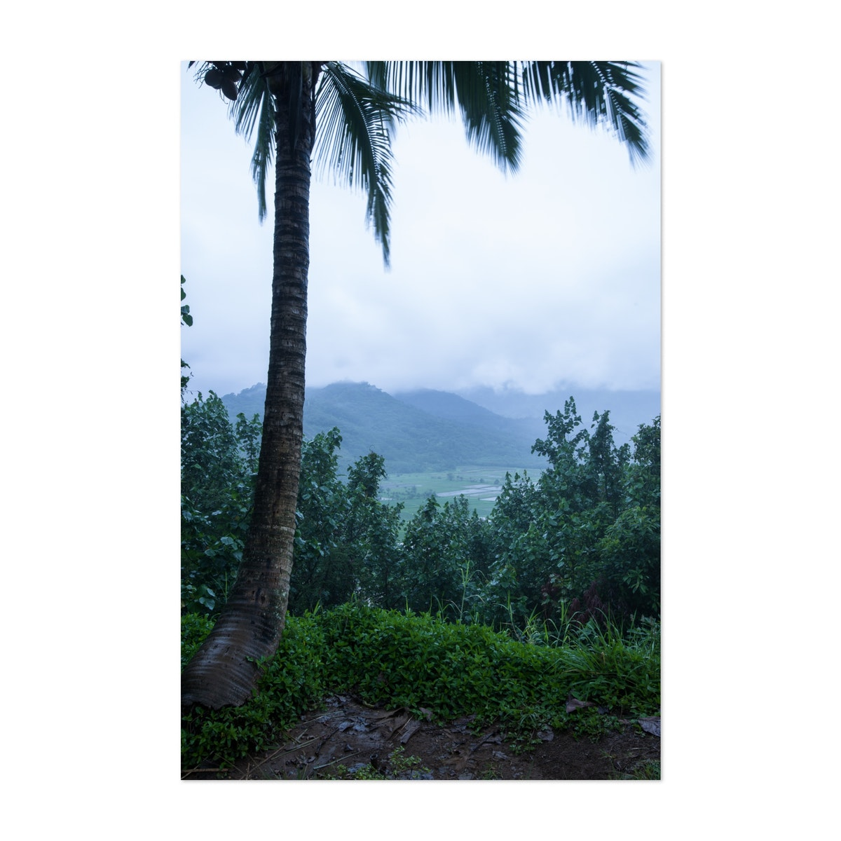 Kaua'i in the Rain