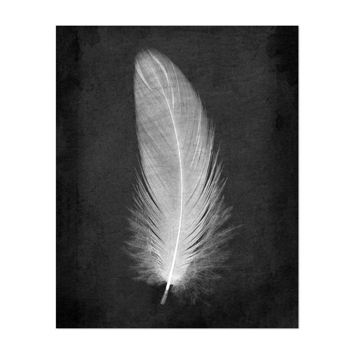 White Feather Textured