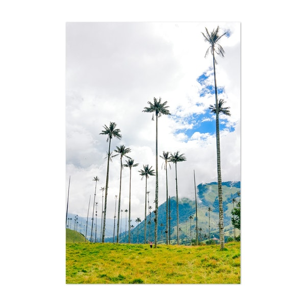 Wax Palms in Cocora Valley Colombia by Sidecar Photo