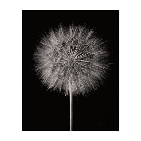 Dandelion Fluff on Black by Debra Van Swearingen