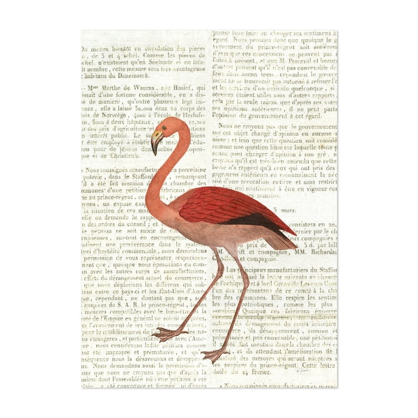 Flying Flamingo No Balloons by Sue Schlabach