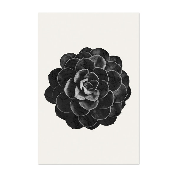 Black Marble Succulent Plant by amini54