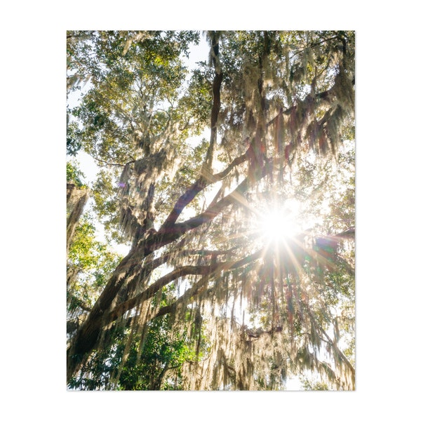 Savannah Spanish Moss XX by Bethany Young