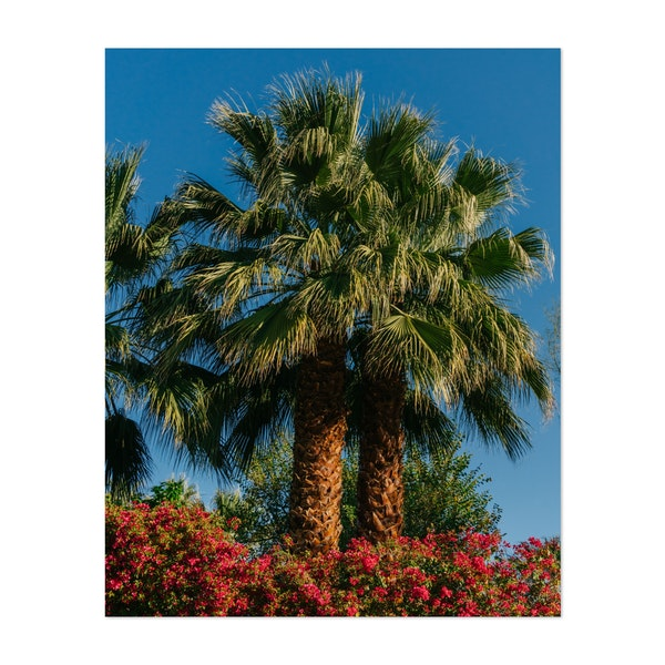 Palm Springs Palms II by Bethany Young