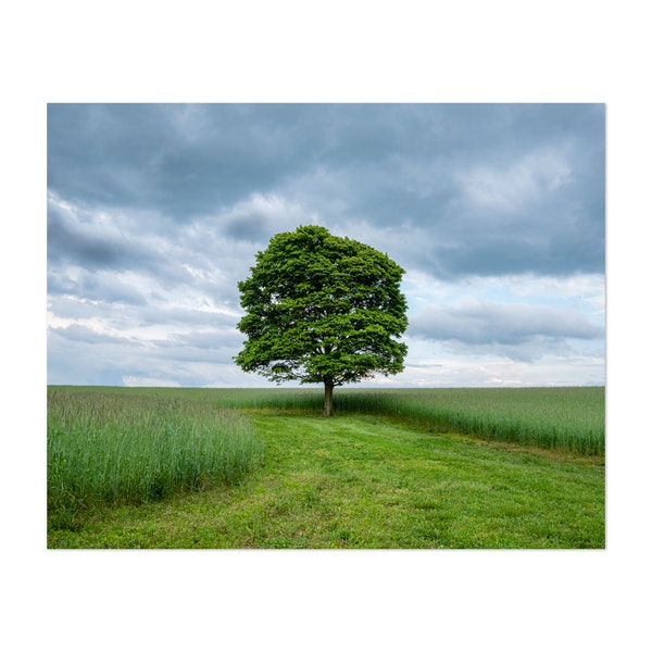 Single Tree in a Field by Jonathan Sprigler