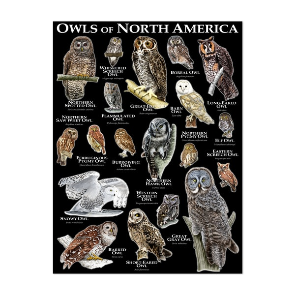 Owls of North America by Roger Hall