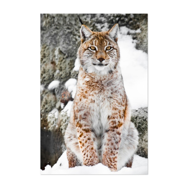 A beautiful and strong wildcat lynx sits upright and straight in the snow by Mikhail Semenov