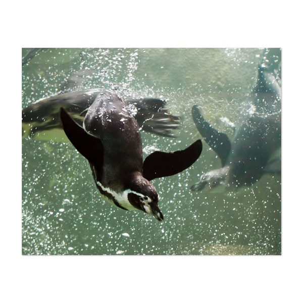 Many (several, three) penguins swim swiftly and deftly in the water (sea). by Mikhail Semenov