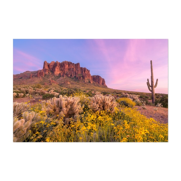 Superstition Wildflowers by Mike Perea