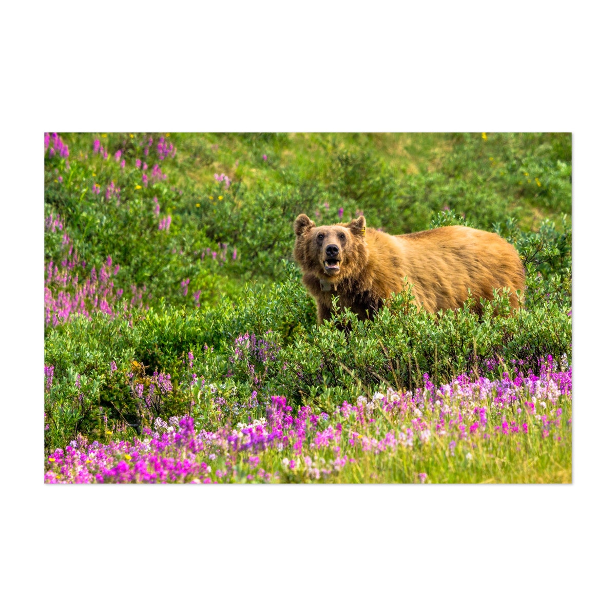 Bear In Flowers