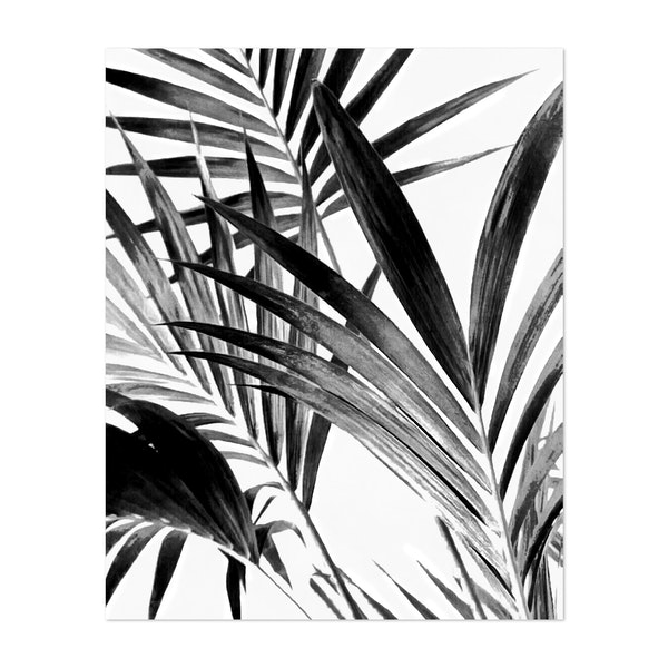 Palm Leaves Black and White 02 by amini54