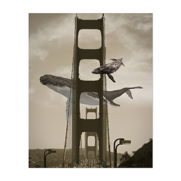 Whale Watching By the Golden Date Bridge by David Loblaw
