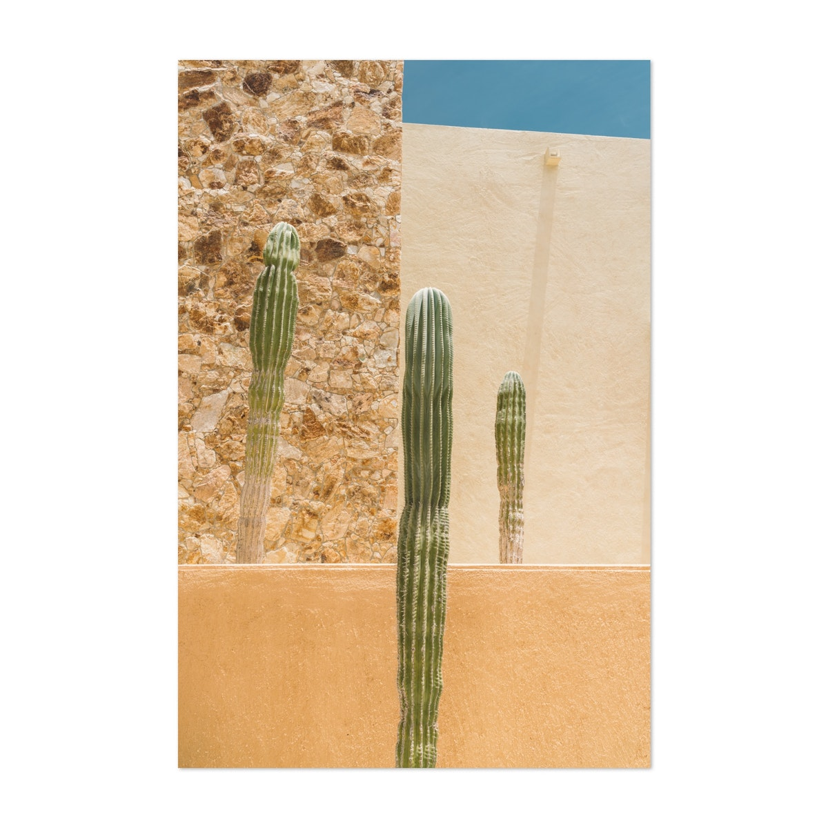 Cabo Cactus Lines