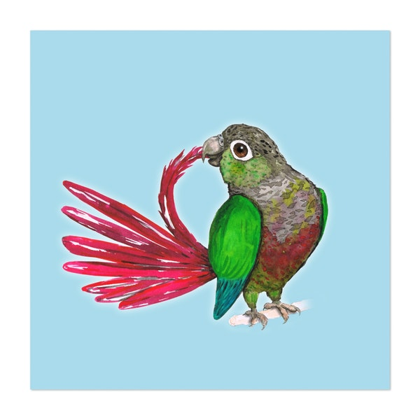 Preening green-cheeked conure by Bwiselizzy