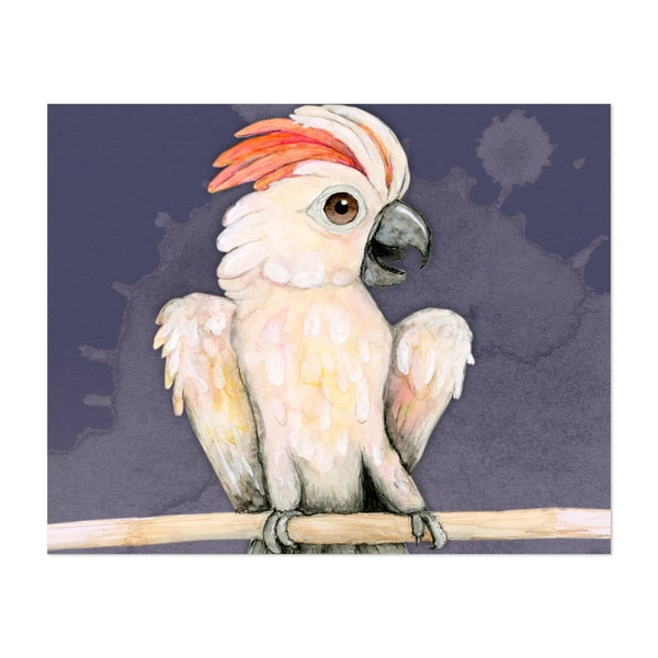 Sulphur crested cockatoo by Bwiselizzy