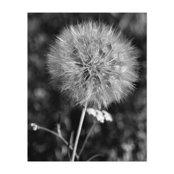 Summer Dandelion II by Bethany Young