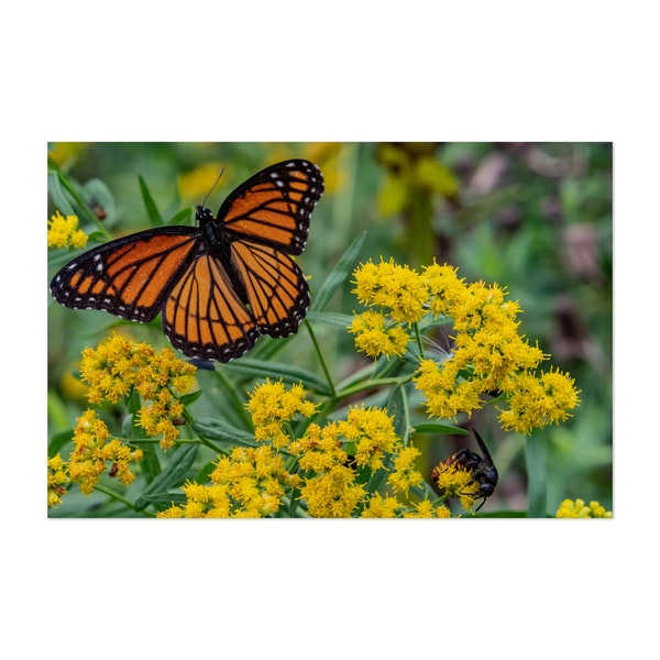 Wasp and Viceroy Butterfly on Goldenrod by Walt Bilous