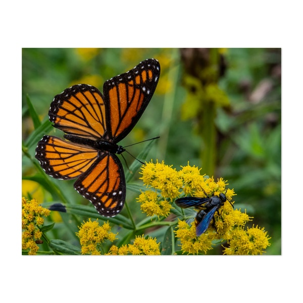 Wasp and Butterfly on Goldenrod by Walt Bilous