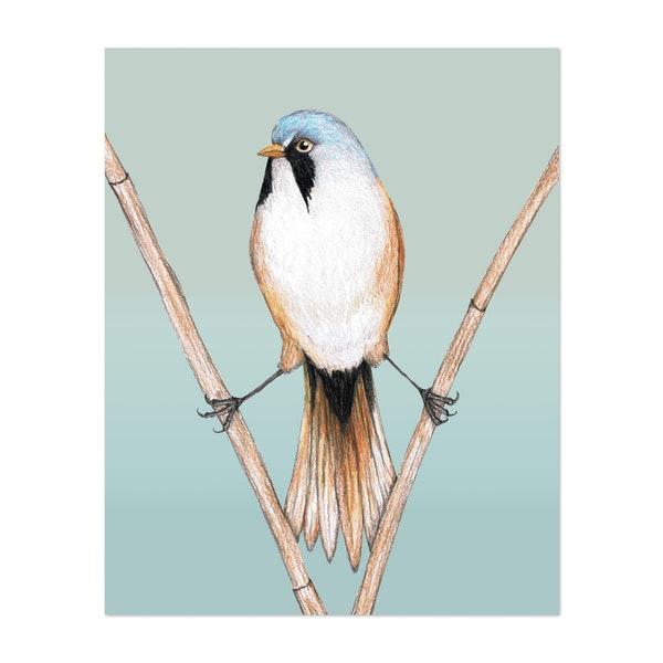 Bearded reedling pencil drawing by Bwiselizzy