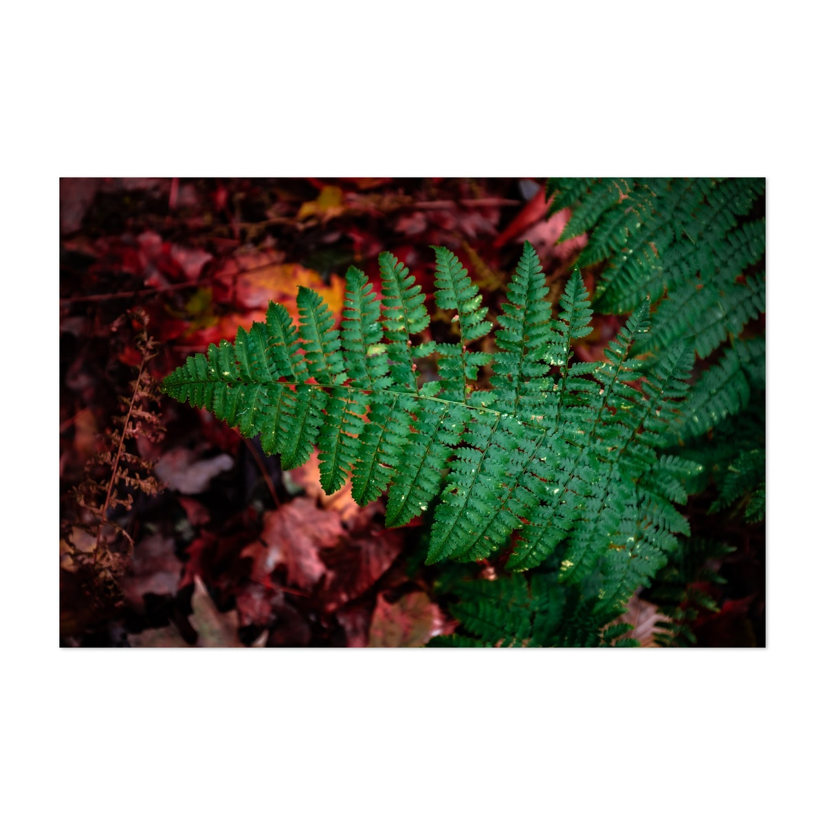 Fern in New York State