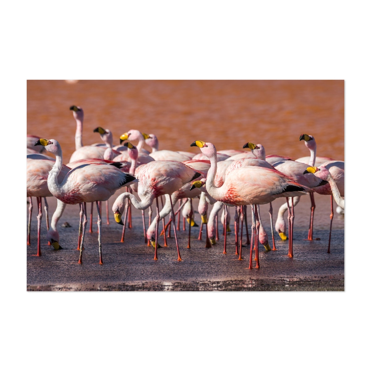 Flamingos In Red Waters