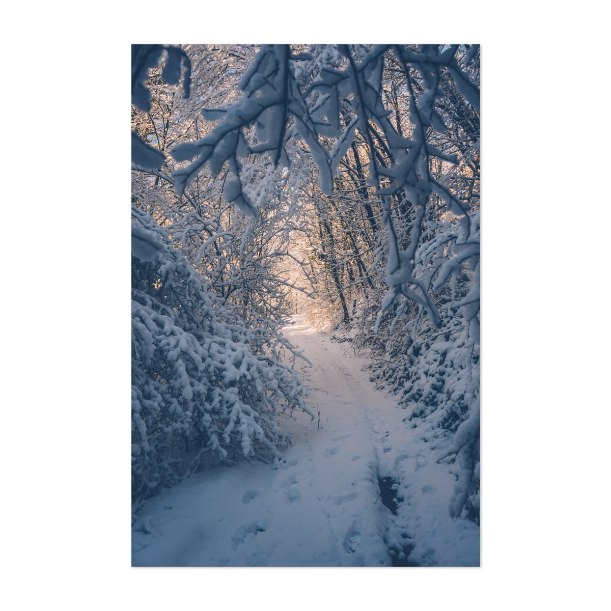 Light In The Snow