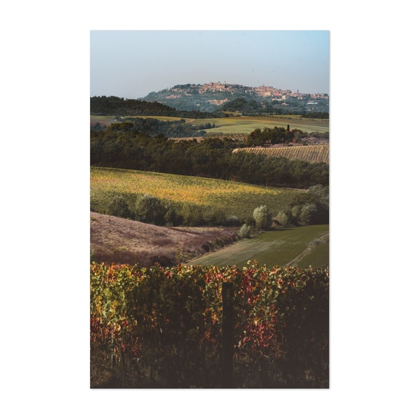 Tuscan Vineyard by Alex Marchi