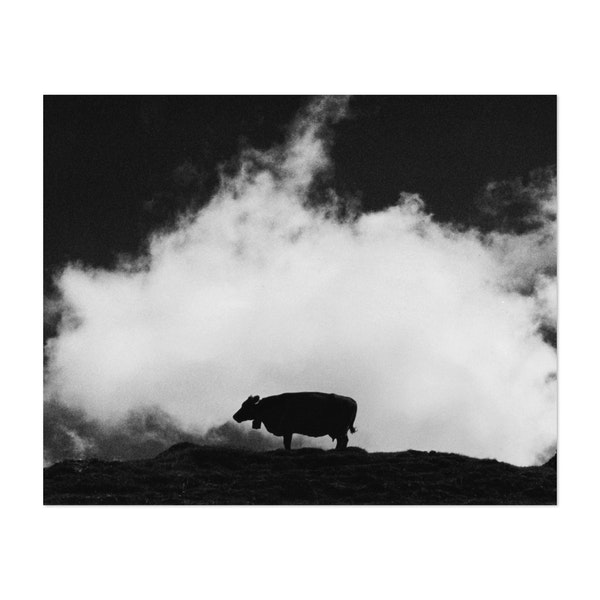 Cow and Cloud by Dorit Fuhg