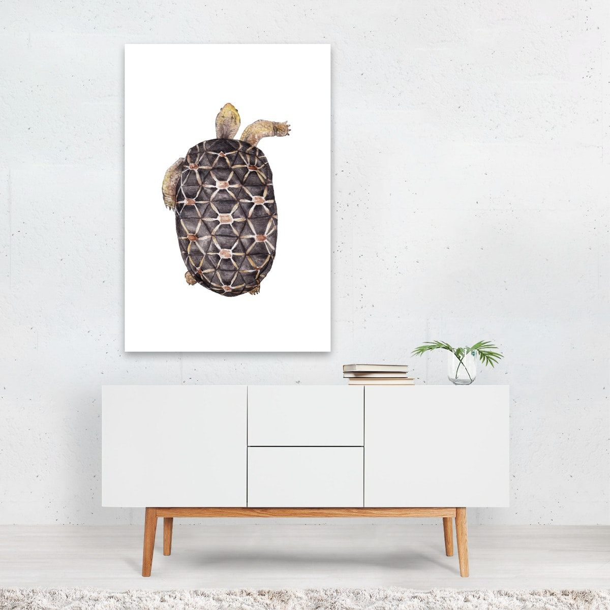 Spider Tortoise Watercolor