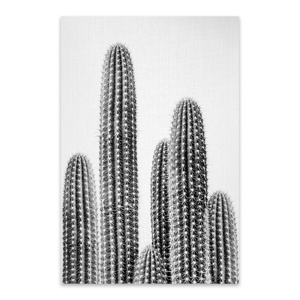 Cactus 2 - Black & White by Gal Design